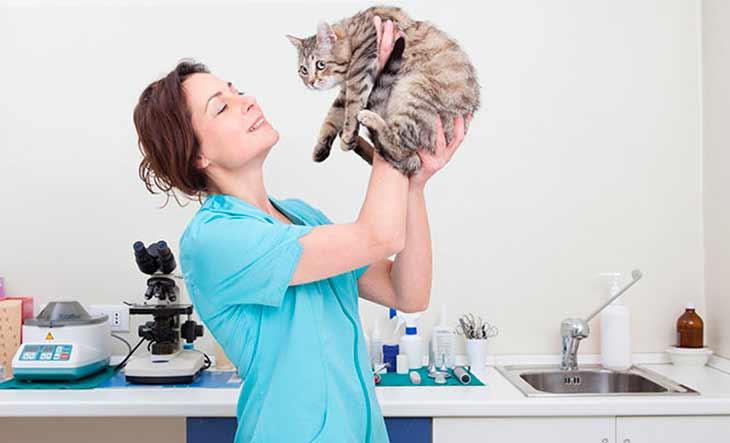 Токсоплазмоз - симптомы у человека, методы лечения