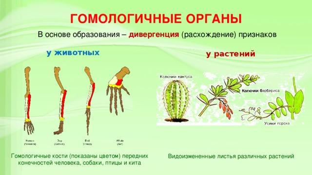 Гомология_(биология) : definition of гомология_(биология) and synonyms of гомология_(биология) (russian)