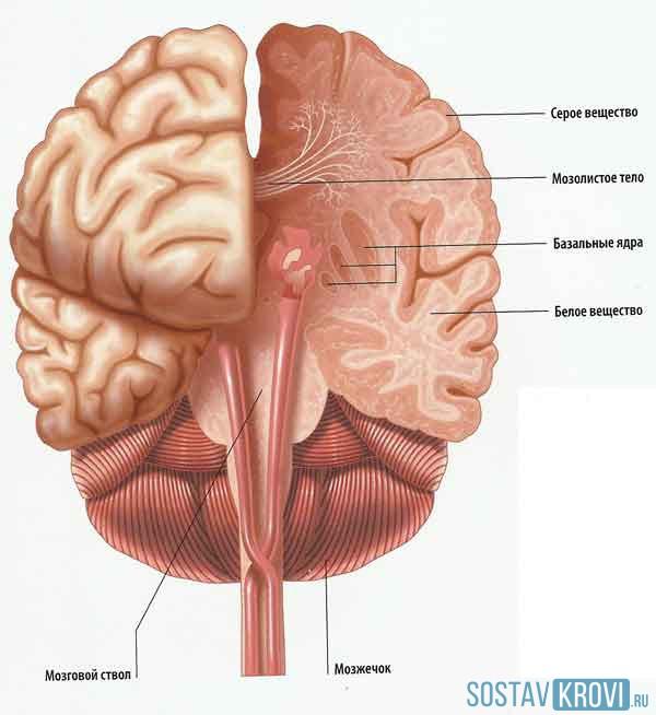 Лейкоареоз головного мозга: что это, причины и лечение
