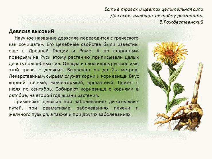 ᐉ латук дикий (компасный) - полезные свойства, описание - roza-zanoza.ru
