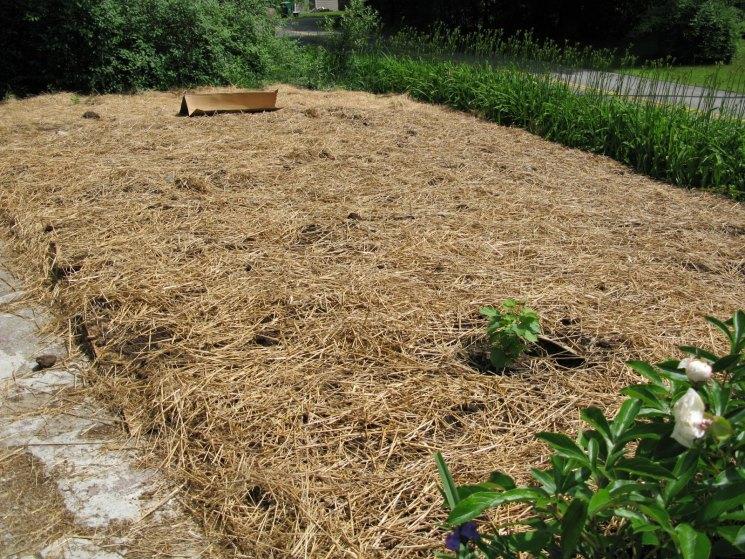 Мульчирование почвы — что это такое? правила мульчирования