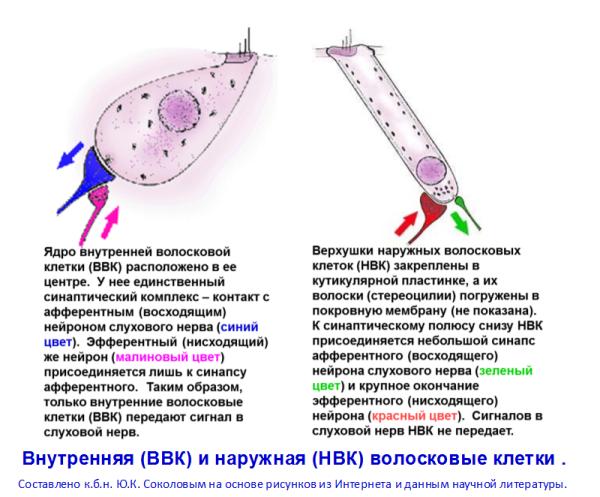 Импедансометрия, что это такое и как она проводится?