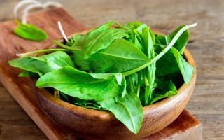 Щавель: польза и вред для здоровья организма