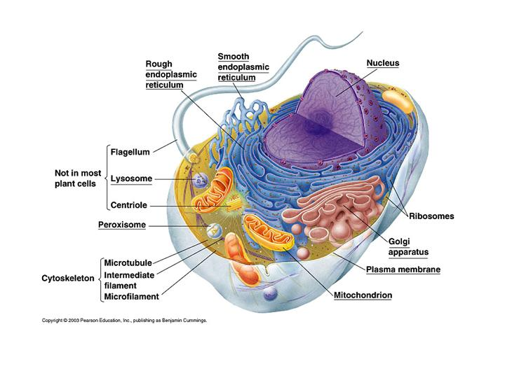 Прокариоты и эукариоты — что это такое | ktonanovenkogo.ru