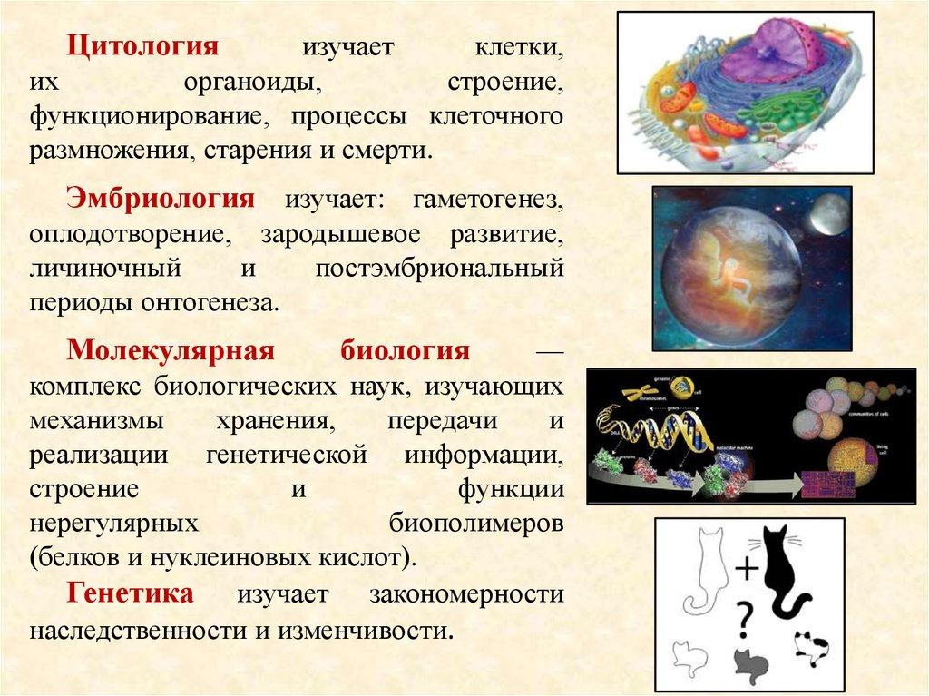 Биология — википедия. что такое биология