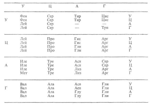 Кодон — википедия. что такое кодон