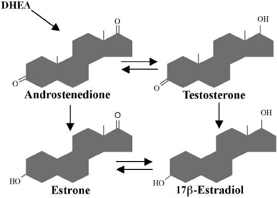 Для чего проводят исследование концентрации андростендиона