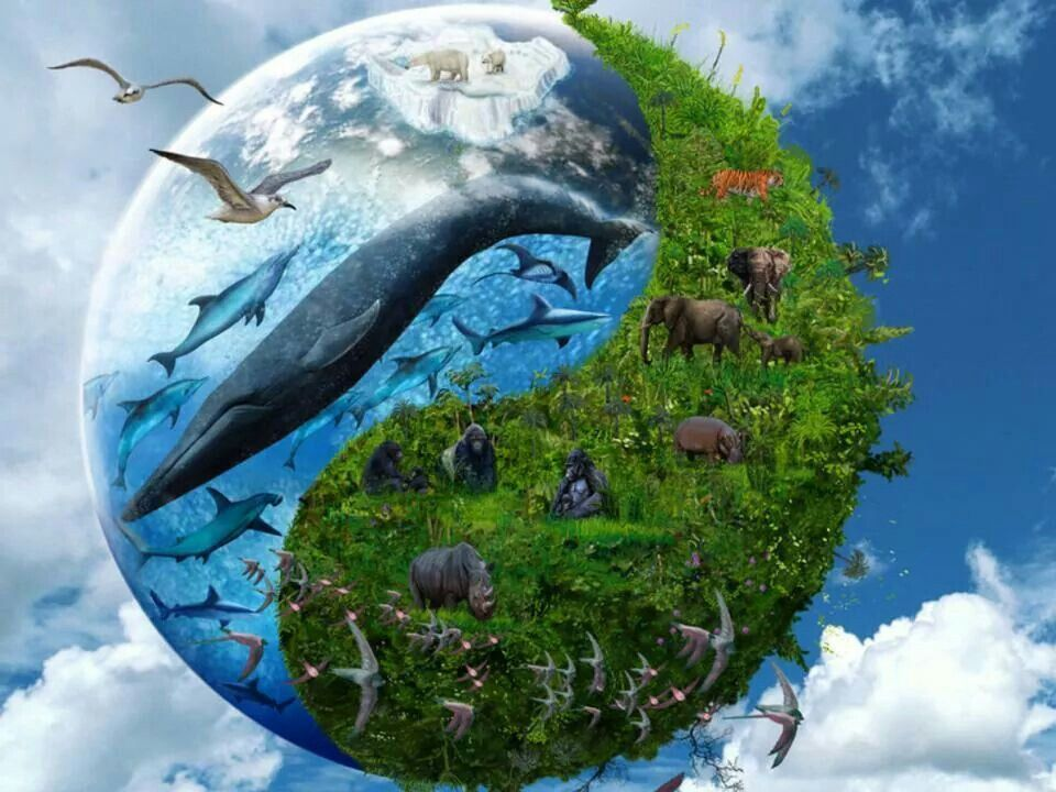 Почему важно биологическое разнообразие? – opiq