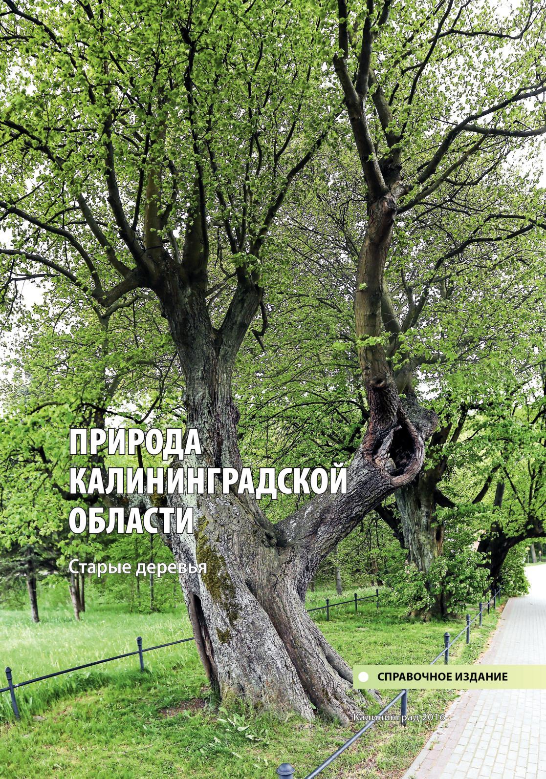 Ольха (древесина)