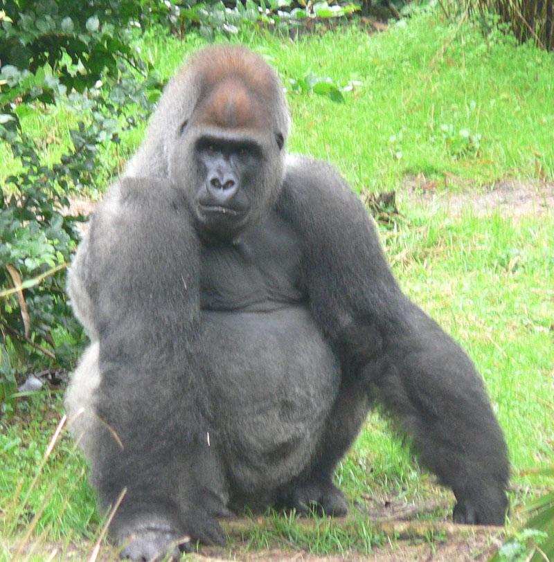 Совместимость обезьяна и обезьяна может привести обоих партнеров к успеху если