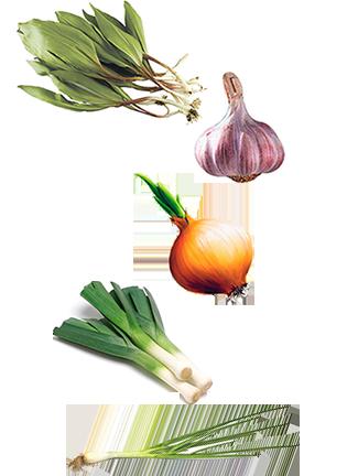 Что такое корнеплод? хранение корнеплодов :: syl.ru