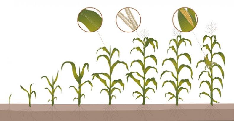 Когда у различных растений наступает период вегетации, в который лучше всего проводить опрыскивание