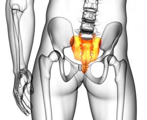 Строение и функции копчика: анатомия, атавизм, где находится, зачем человеку нужен копчик