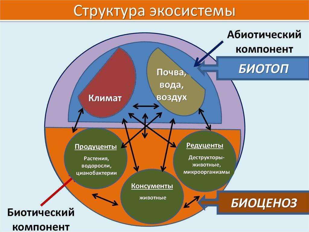 Биоценоз — википедия. что такое биоценоз