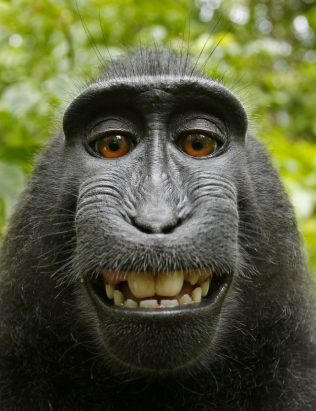 Обезьяна - monkey