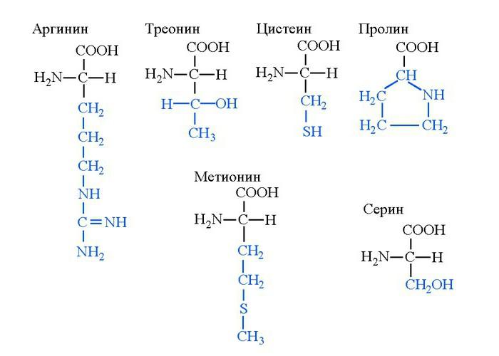 Триптофан — что это такое, продукты содержащие аминокислоту, противопоказания