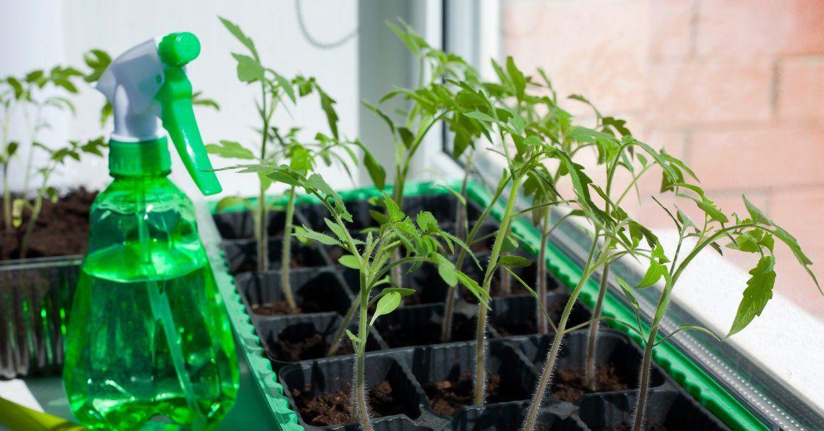 Рассада: посадка, выращивание, уход, советы и мастер-классы