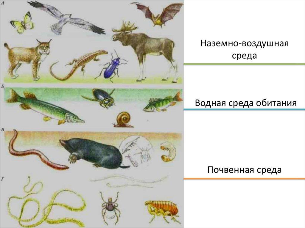 Среда обитания живых организмов - основные виды и характеристика — природа мира