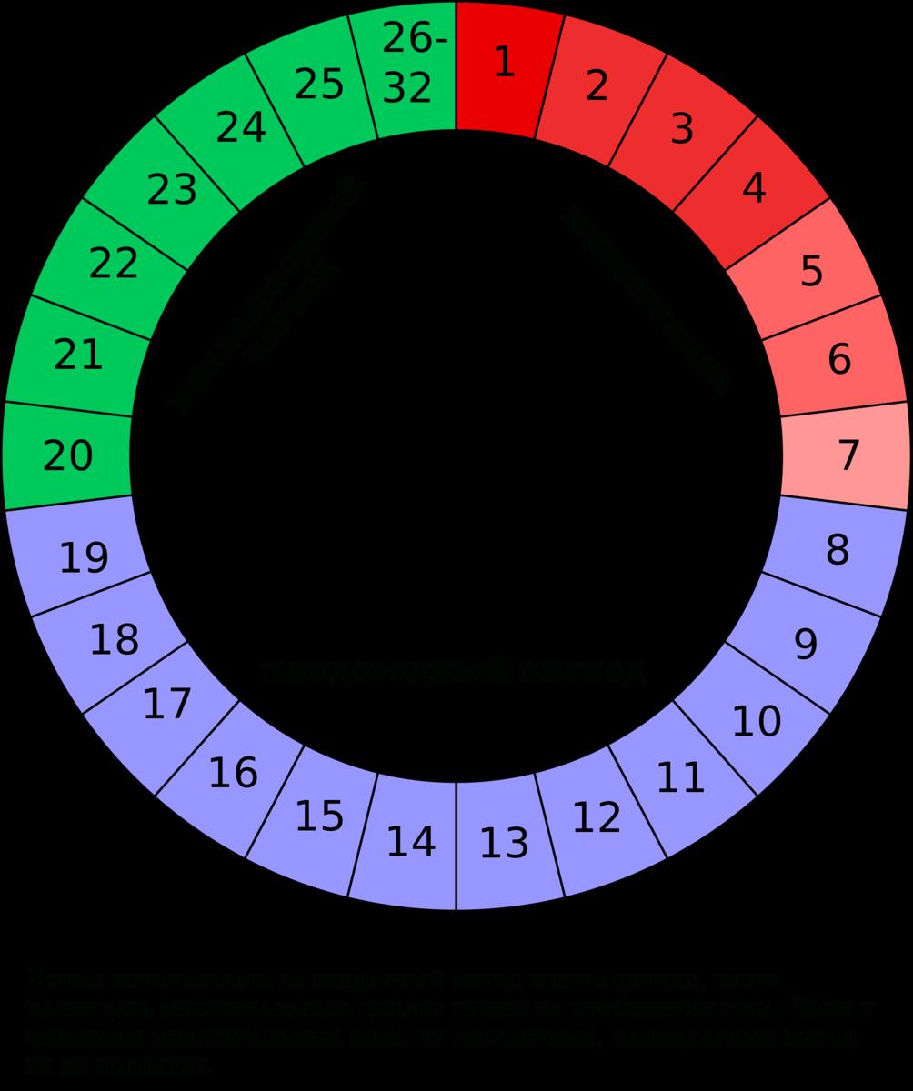 Менструальный цикл (цикл месячных) – что это такое | нормы дней месячных, продолжительность, интенсивность кровотечений у женщин | o.b.