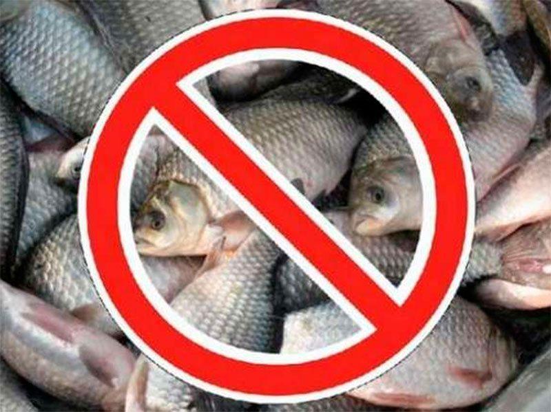 Что рыбак должен знать о нересте - охота и рыбалка - медиаплатформа миртесен
