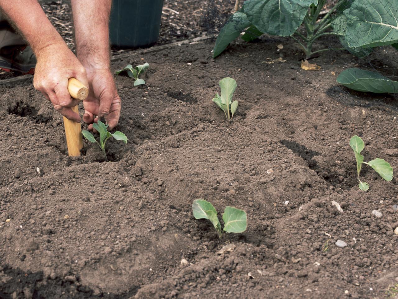 Удивительное растение — брюква: полезные свойства, противопоказания и использование для лечения множества заболеваний
