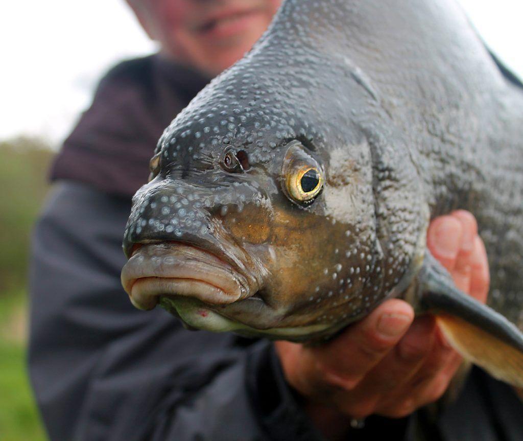 Что такое бровка? как ее найти? значение бровки на рыбалке