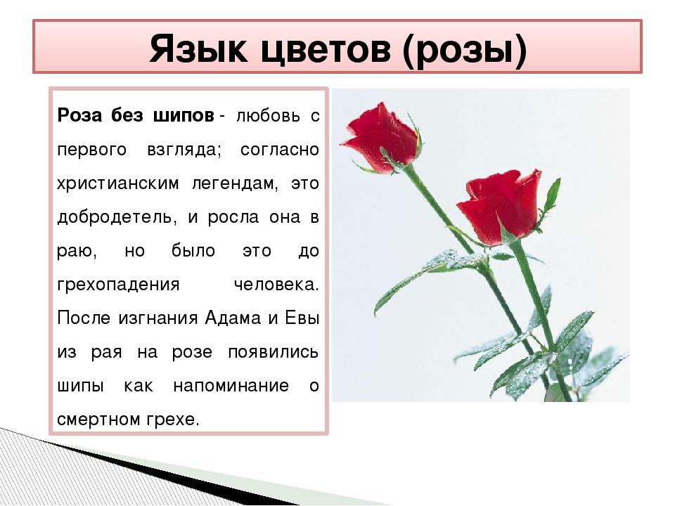 Цветок что это? значение слова цветок