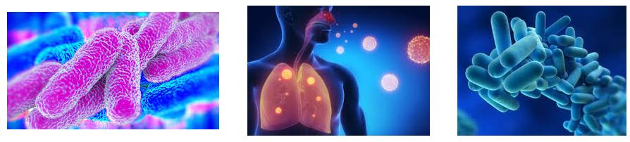 Легионеллёз (болезнь легионеров) - описание болезни