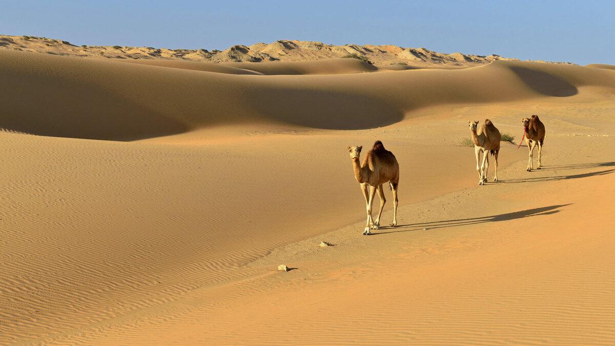 Что такое пустыня - определение, самые большие пустыни мира