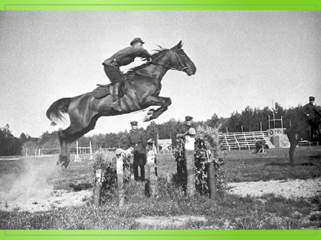 Конкур: соревнования на лошадях (лучшие породы лошадей, упражнения, препятствия, разряды)