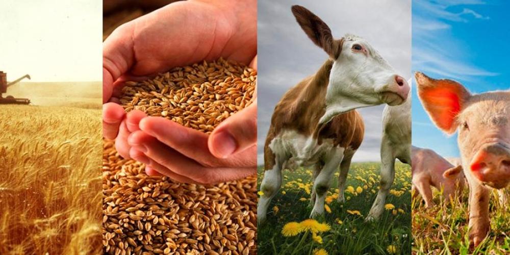Животноводство россии: основные виды и перспективы — cельхозпортал