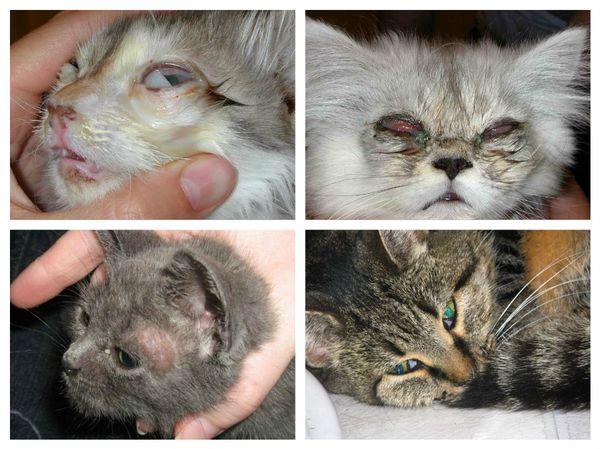 Токсоплазмоз — симптомы, признаки, лечение и профилактика