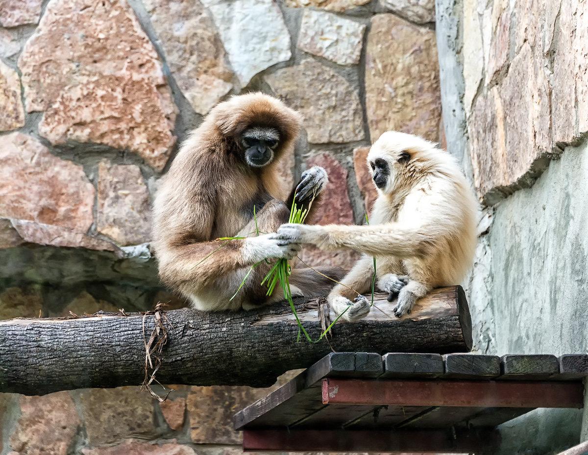 Зоопарк — википедия. что такое зоопарк