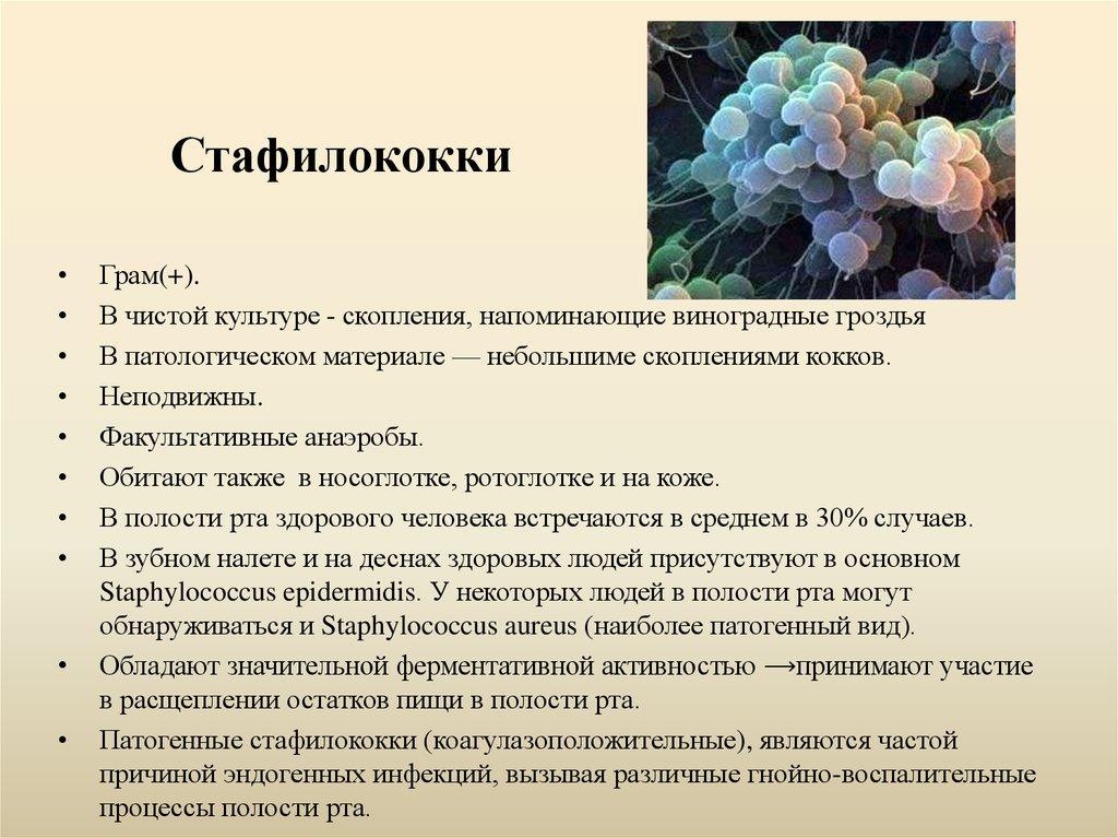 Средства для лечения золотистого стафилококка: виды инфекций, чем лечить