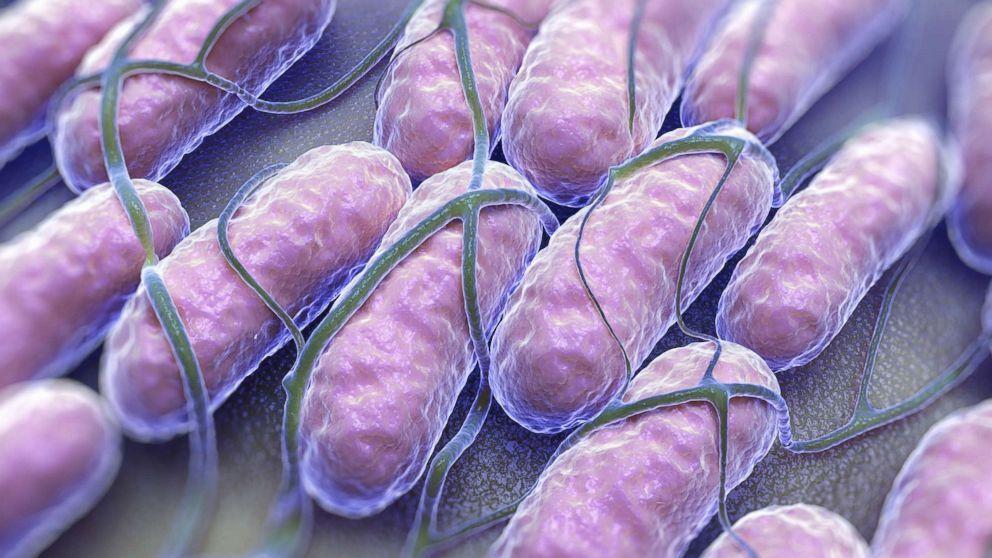 Сальмонеллез. симптомы, причины, диагностика и лечение болезни.