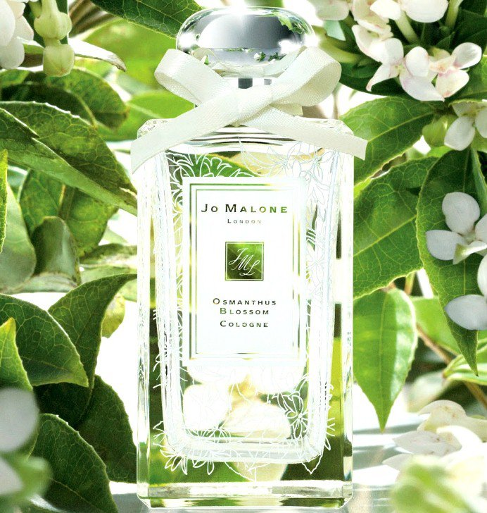 Османтус – фото цветка, уход, описание растения, выращивание