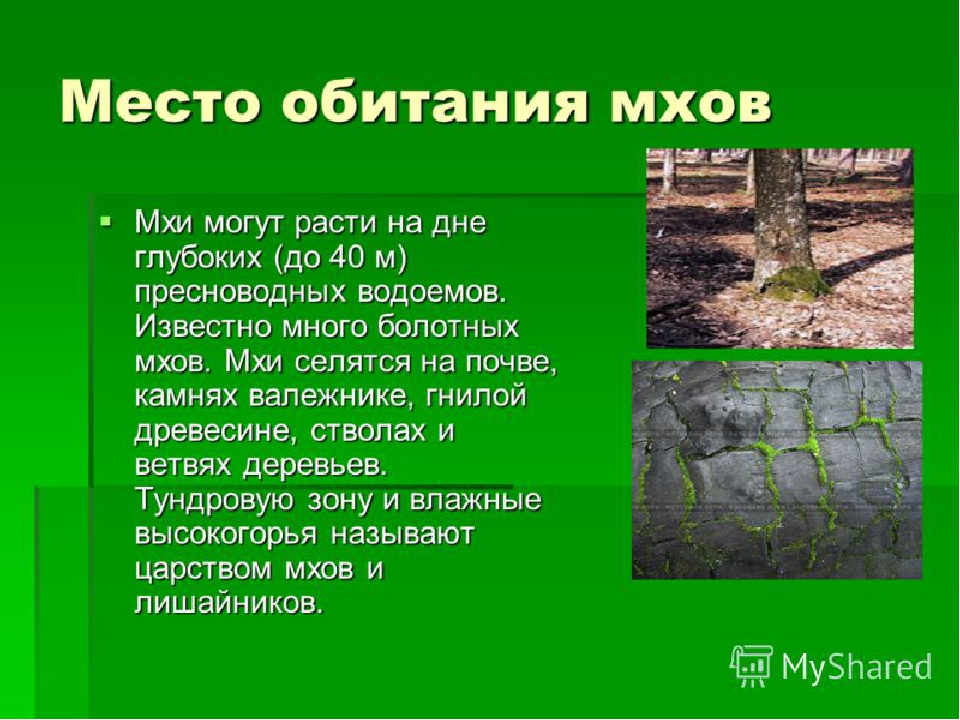 Характеристика, примеры и защита местообитаний