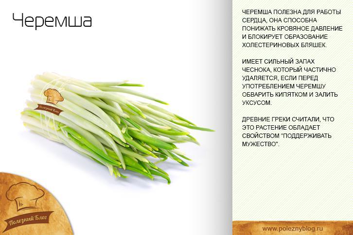 Черемша: полезные свойства, противопоказания, как выращивать и рецепты