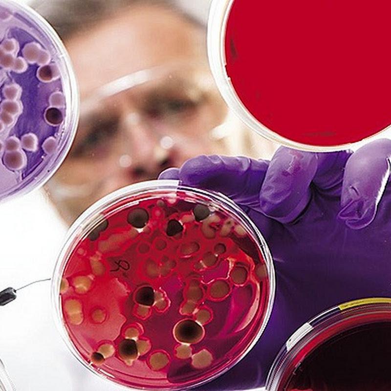 Стволовые клетки: виды, получение и источники, образование клеток