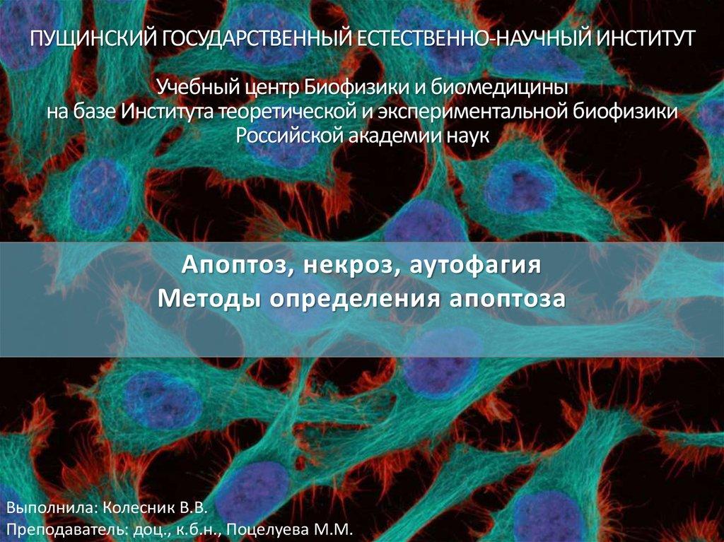 Апоптоз и некроз - патология - медицинская учебная литература
