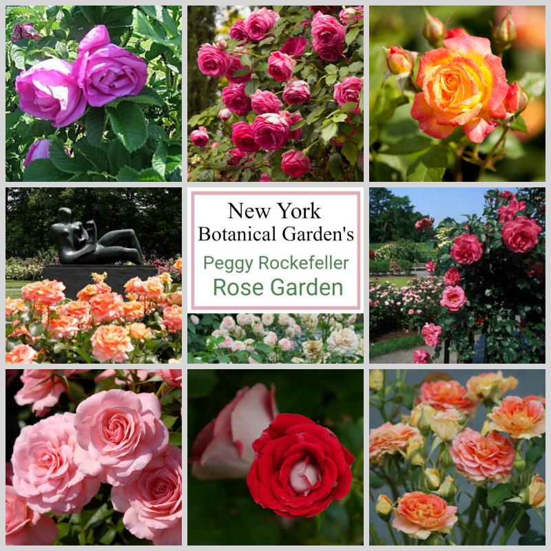 Что такое розарий, каким он бывает и какие сорта роз для него выбрать — ботаничка.ru