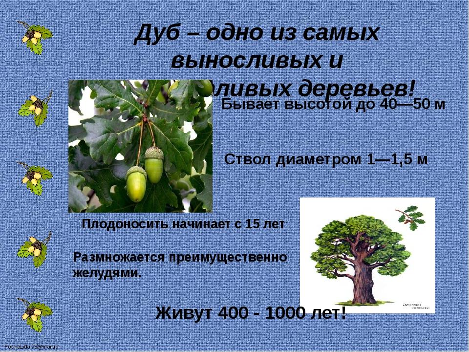 Дуб — как выращивать: от ухода за семенами до поддержки роста + 101 фото