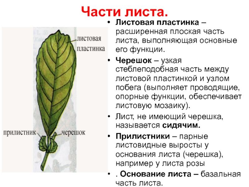 Черешок - вики