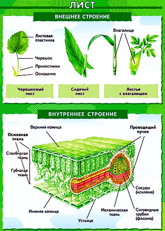Побег (ботаника)