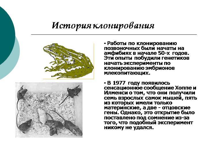 «противоречит автономии личности»: чем опасно клонирование человека — рт на русском