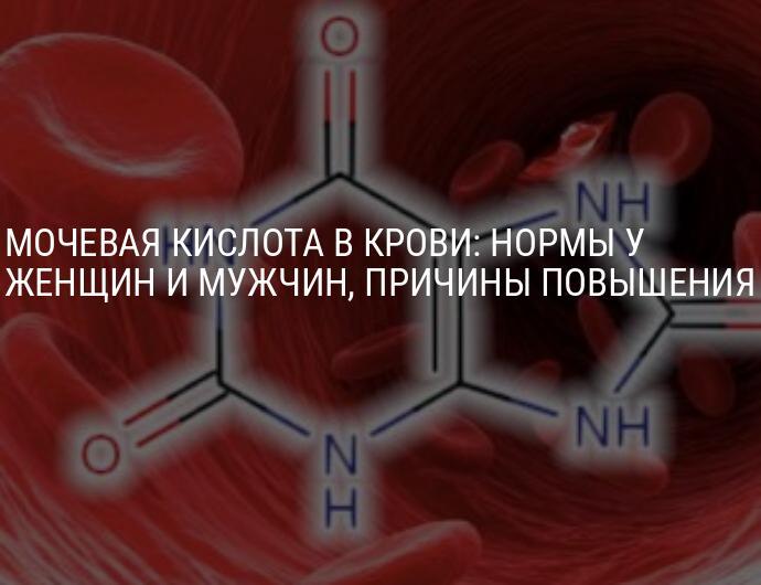 Мочевая кислота в крови повышена: причины, симптомы и лечение (у женщин и мужчин)