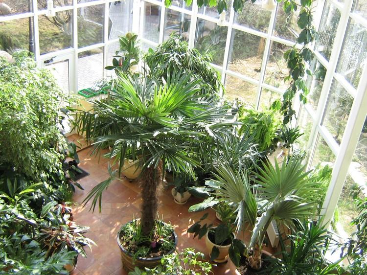 Классификация растительности — википедия. что такое классификация растительности