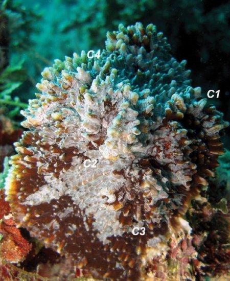 Искусственный риф - artificial reef
