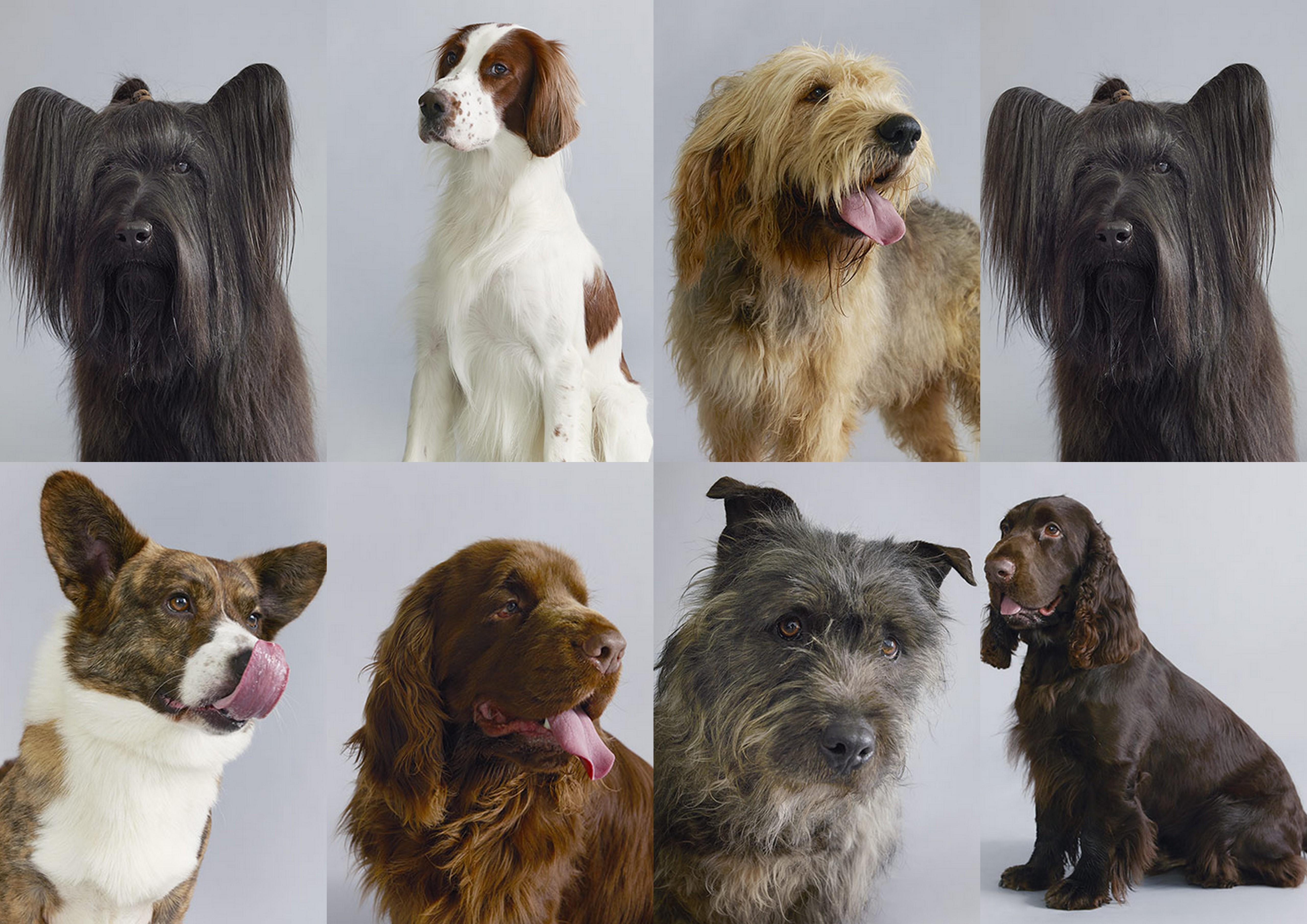 Собака (животное)