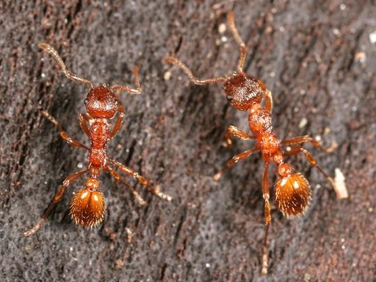 """Продолжительность жизни муравьев разных видов и в разных условиях - служба дезинфекции """"экоконтроль"""""""